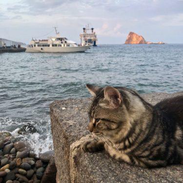 gatto sul molo